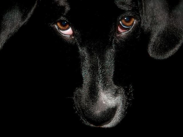 black-dog-palette_25981_990x742