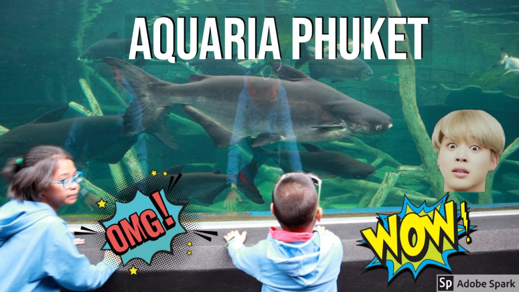 Kids Fed the Fishes in Aquaria Phuket: Exploring the Largest Aquarium in Thailand